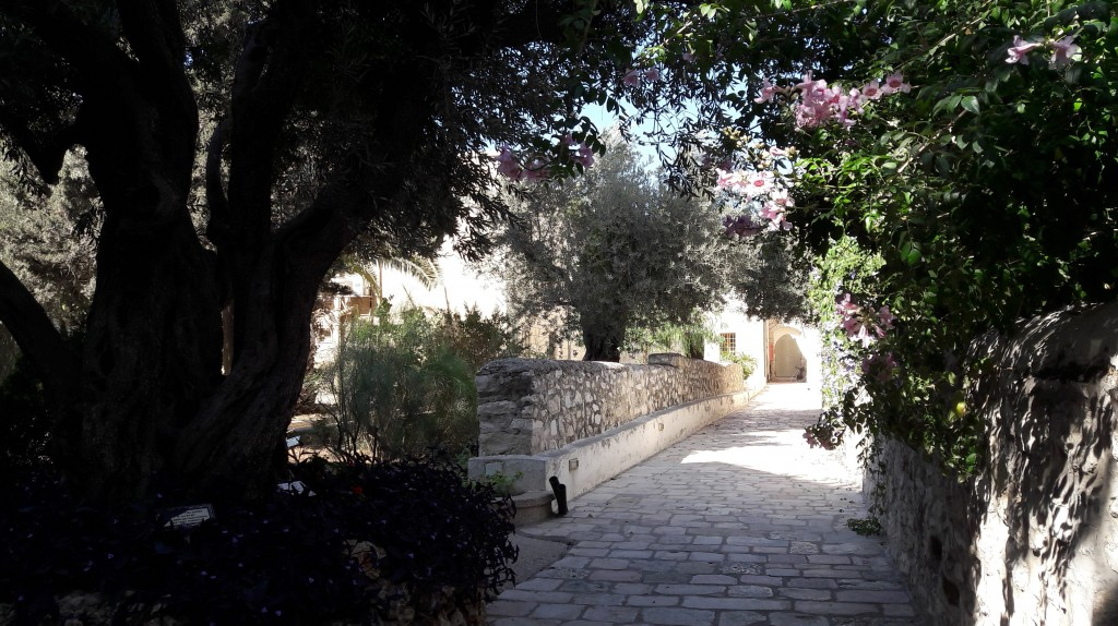 Peaceful college grounds, with very ancient olive trees